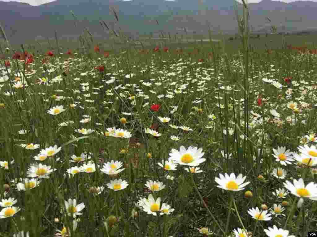 طبیعت موچش- کردستان عکس: (ارسالی شما)