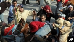 Supporters of Egyptian President Hosni Mubarak, on horses and a camel, clash with anti-regime protesters in Cairo on February 2, 2011