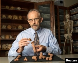 Paleoanthropologist John Kappelman is seen with 3-D printouts of Lucy's skeleton illustrating the compressive fractures in her right humerus that she suffered at the time of her death 3.18 million years ago in this image from the University of Texas at Austin, for release, Nov. 30, 2016. (Courtesy Marsha Miller/The University of Texas at Austin)