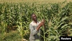 Un travailleur de race noire dans une ferme en Afrique du Sud, 29 février 2012.