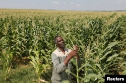 Some Zimbabweans seized white-owned commercial farmers from 2000.