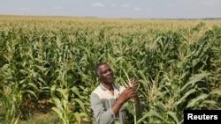 En Afrique, l'agriculture reste tributaire des pluies