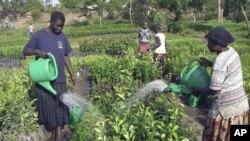 2011-та исполнета со предизвици на глад и сиромаштија