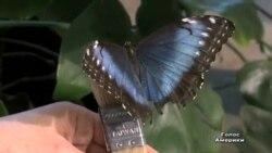 Весну відзначили виставкою метеликів