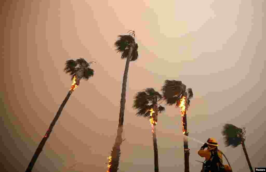 Un bombero riega palmeras mientras el incendio Woolsey Fire avanza en Malibu, Calif., Nov. 9, 2018.