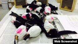 Những con chim bị nhốt trong túi vải nhằm mục đích buôn lậu sang Đài Loan. Ảnh chụp màn hình trang web baohaiquan.vn