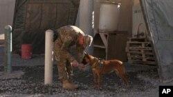 Một binh sĩ Mỹ đang cho chú chó nghiệp vụ uống nước tại căn cứ không quân Kandahar ở Afghanistan.
