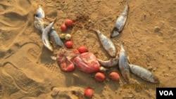 Namibe depende da pesca