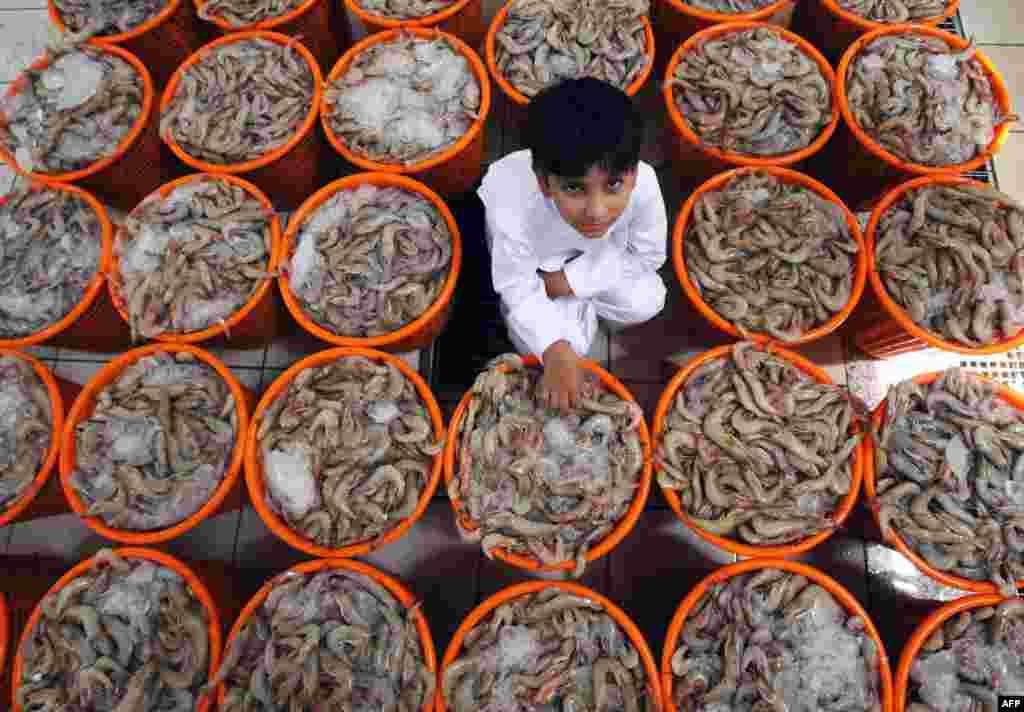 쿠웨이트 시의 대형 수산물 시장에서 한 소년이 새우 바구니 옆에서 포즈를 취하고 있다. 쿠웨이트는 지난 6개월반동안 새우 번식을 위해 새우잡이를 금했다가, 다시 새우잡이 재개를 허용했다.