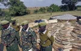 Kenya Wildlife Service officers stand guard near a shipment of elephant tusks and rhino horns that were intercepted at Jomo Kenyatta International Airport, in Nairobi, Kenya, August 2010. (file photo)