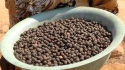 Produtores de café querem pôr Angola no topo – 3:39