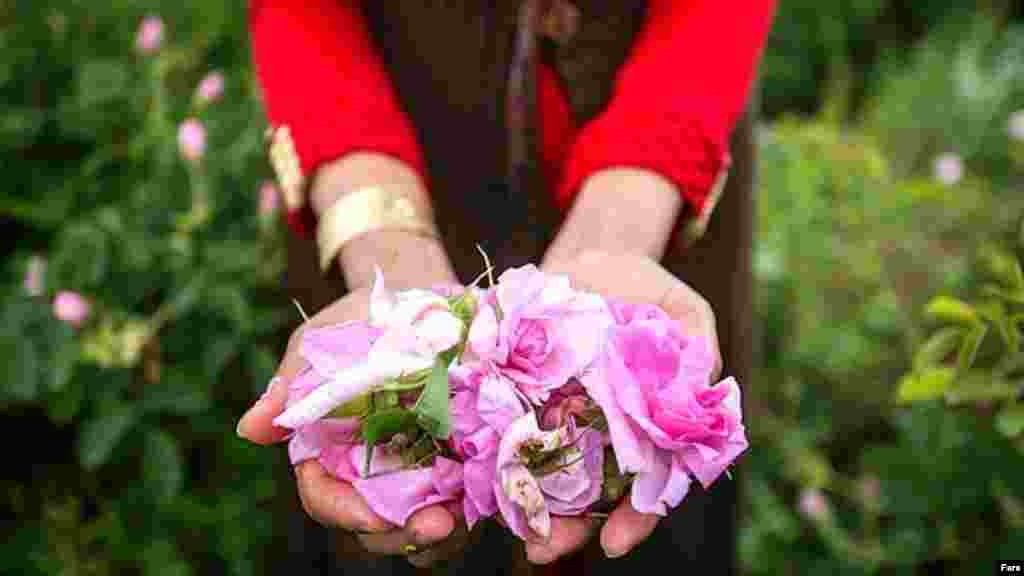 Iran Mashhad flower