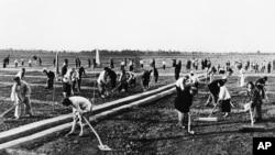 歷史照片:在河南省某人民公社集體勞動的農民。 (1959年9月17日)