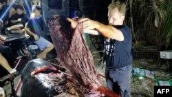 Darrell Blatchley dari D' Bone Collector Museum Inc., menunjukkan sampah plastik yang ditemukan di dalam perut paus.