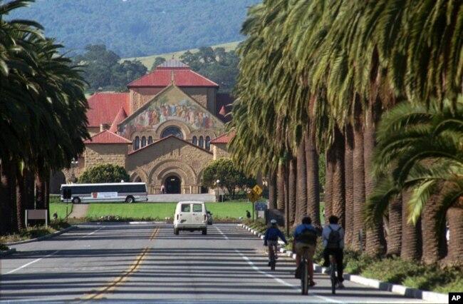 Palma Yolu, Stanford Universitetinin girəcəyi