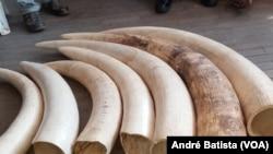 Marfim teria por destino a Ásia