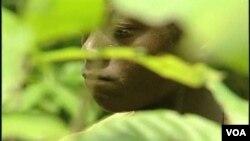 En África, a muy temprana edad los niños empiezan a trabajar recogiendo los frutos de la cocoa.
