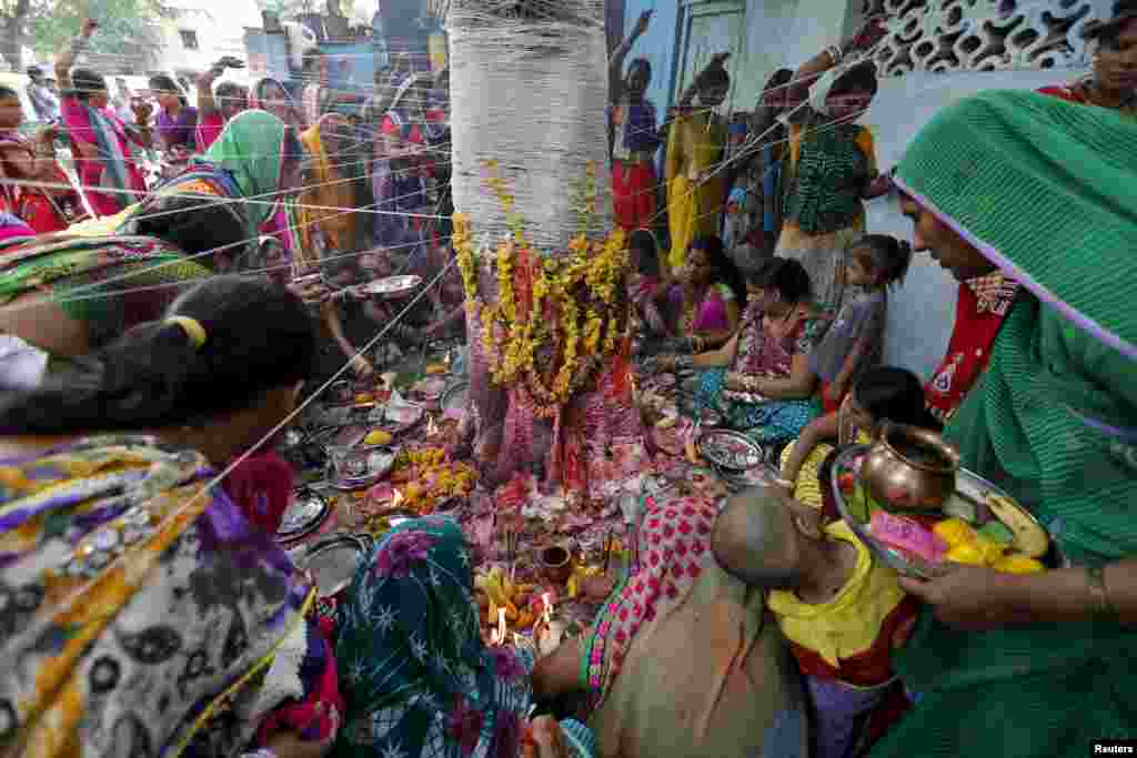 Married Hindu women tie sacred threads around a banyan tree, believed to be a divine wishing tree, at a ceremony to pray for good luck during the Hindu religious festival of Vata Savitri Purnima in Ahmedabad, India.