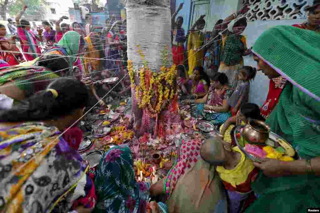 Perempuan Hindu yang telah menikah mengikat benang suci di pohon beringin, yang diyakini sebagai pohon suci, di sebuah upacara doa untuk memohon keberuntungan di festival keagamaan Hindu Vata Savitri Purnima di Ahmedabad, India.