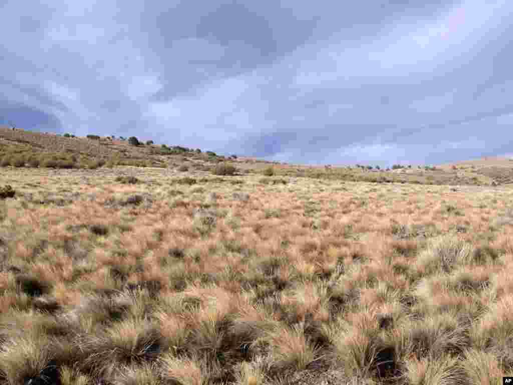 Semi-arid landscape near Pilcaniyeu, Argentina. (Photo: Fernando T. Maestre)