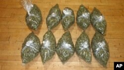 Warga di negara bagian Oregon, Colorado, dan Washington akan memutuskan apakah marijuana untuk kesenangan pribadi bisa sah digunakan orang dewasa (foto: Dok).