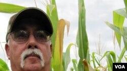 Bruce Trautman grows conventional and genetically modified drought-tolerant corn near Sutton, Nebraska, August 2012 (S. Baragona / VOA).