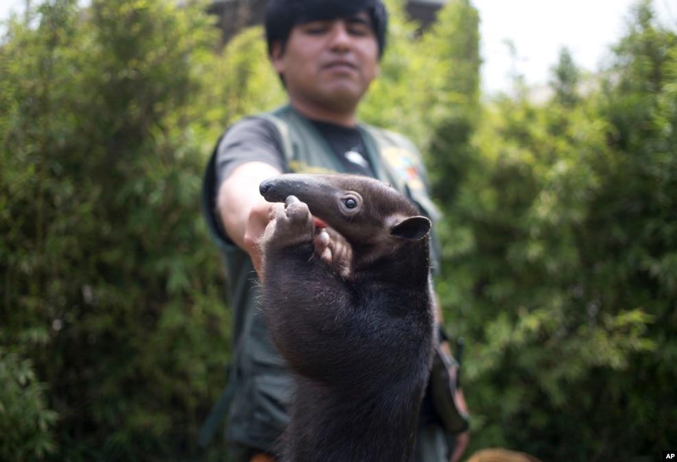 Peru - Hoaçipa heyvanxanası