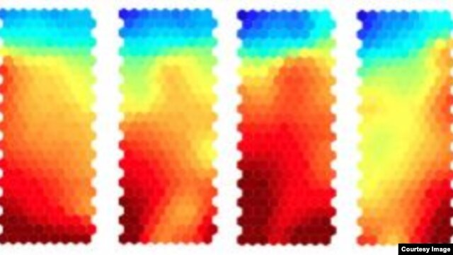 Aggressor cells, which have the potential to cause autoimmunity, are targeted by treatment, causing conversion of these cells to protector cells. Gene expression changes gradually at each stage of treatment, as illustrated by the color changes in this series of heat maps. (Credit: University of Bristol/Dr. Bronwen Burton