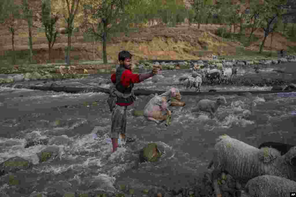 A Kashmiri shepherd tosses a lamb after rescuing it from being washed away in Harshan village 35 kilometers (22 miles) north of Srinagar, Indian-controlled Kashmir.