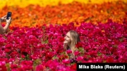 "Norah Miller has her picture taken by her friend Emma McCain as they visit the 50 acres of Ranunculus flowers at ""The Flower Fields"" in Carlsbad, California, March 31, 2021. REUTERS/Mike Blake"