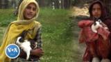 rabbit girls