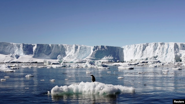 File - An Adelie penguin stands atop a block of melting ice near the French station at Dumont d'Urville in East Antarctica Jan. 23, 2010.