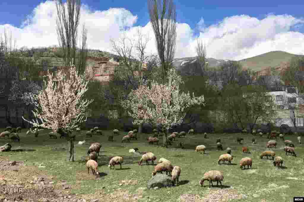طبیعت بهاری استان همدان عکس: ایمان حامی خواه