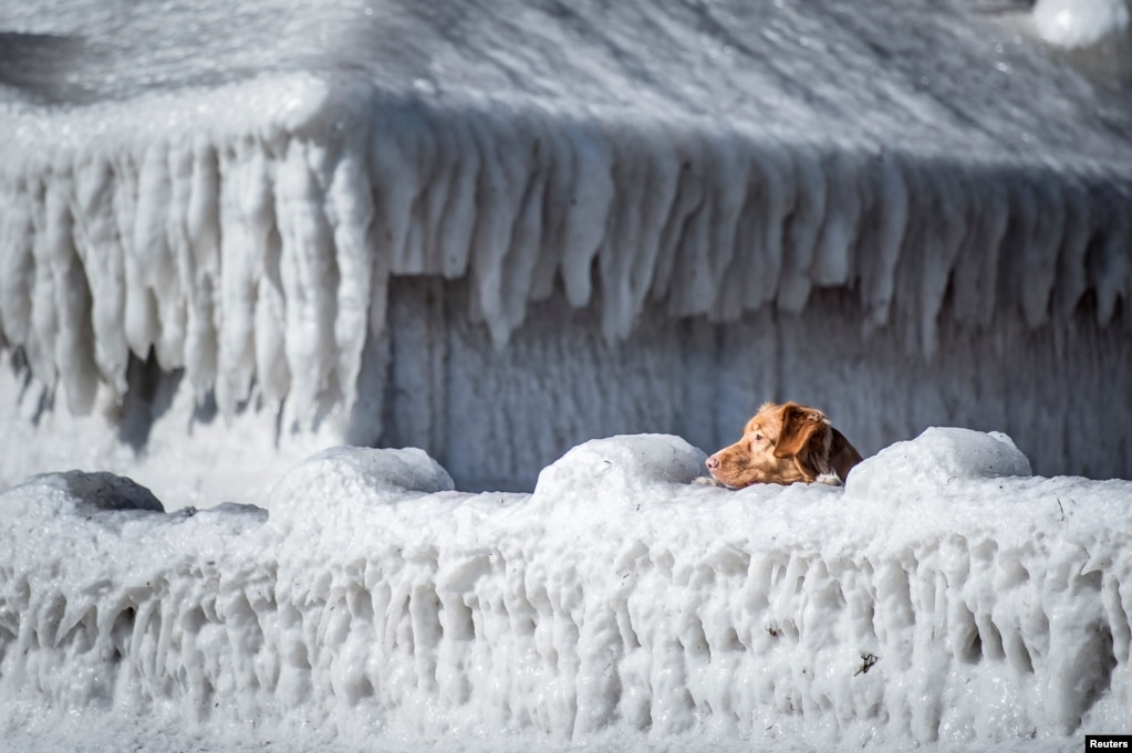 A dog looks over a house covered in ice by the coast at Faxe Bay, south of Copenhagen, Denmark.