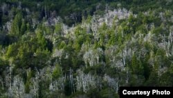 Drought triggered this forest die-off in Argentina in 2004. Photo credit: Thomas Kitzberger