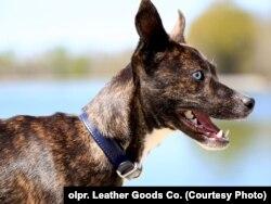 Фірма також працює на ринку товарів для домашніх тварин