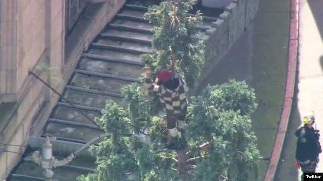 A man is seen atop a 24-meter tree in downtown Seattle in this photo posted on Twitter by KOMO News. (KOMO)