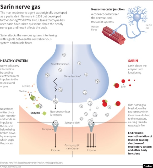 How Sarin Affects the Body