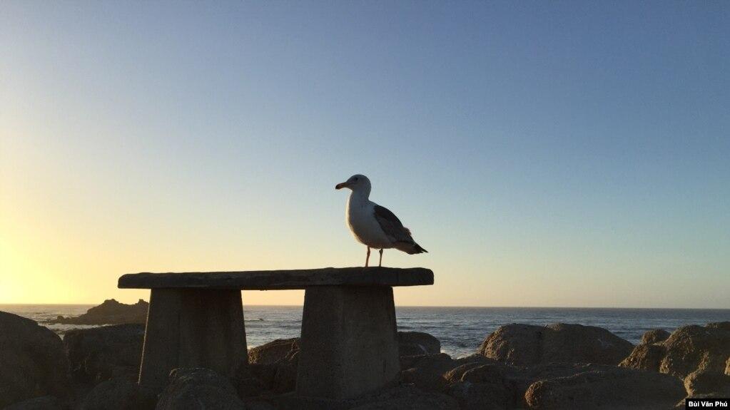 Hoàng hôn trên biển Pacific Grove (Ảnh: Bùi Văn Phú)