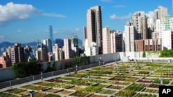 Hong Kong professor Jim Chi Yung's experimental rooftop garden.