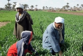 In Egypt the Nile has allowed agriculture to flourish for millenia.