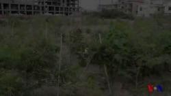 کراچی کا پہلا ہرابھرا جنگل