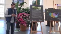 Amerikana: Milli Botanika Bağı