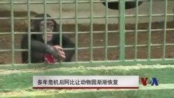 多年危机后阿比让动物园渐渐恢复