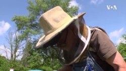 英语视频:西维吉尼亚州失业工人化身养蜂人
