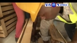 Manchetes Africanas 10 Maio 2017: Caracol africano procurado na Ásia