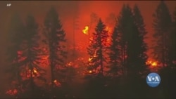 Науковці про драматичні пожежі: зміни клімату - головна причина. Відео