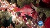 ဆန္းျပားလာတဲ့ Christmas သစ္ပင္မ်ား