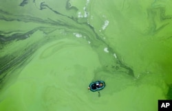 A fisherman in a rubber boat is surrounded by rotting cyanobacteria in the Kyiv Water Reservoir near Kyiv, Ukraine, Nov. 15, 2020.