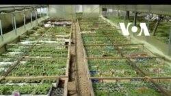 Poljoprivreda, još jedna žrtva politike